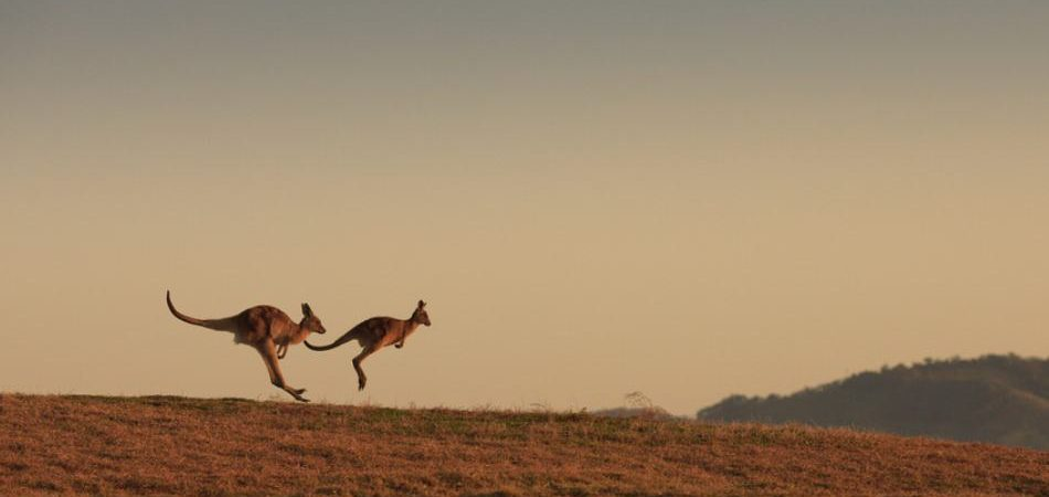 best place to see kangaroos near melbourne